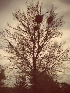 Nesting up high