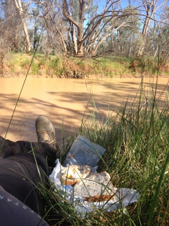 i was riding along this flat landscape for a day and come to this water hole...birds, animals, big gum tree's, colourful birds,,,what an awesome surprise!...i forgot all that pain, just sitting by and unwrapping that sandwich she made for me with her favourite cheese:)...life is good!