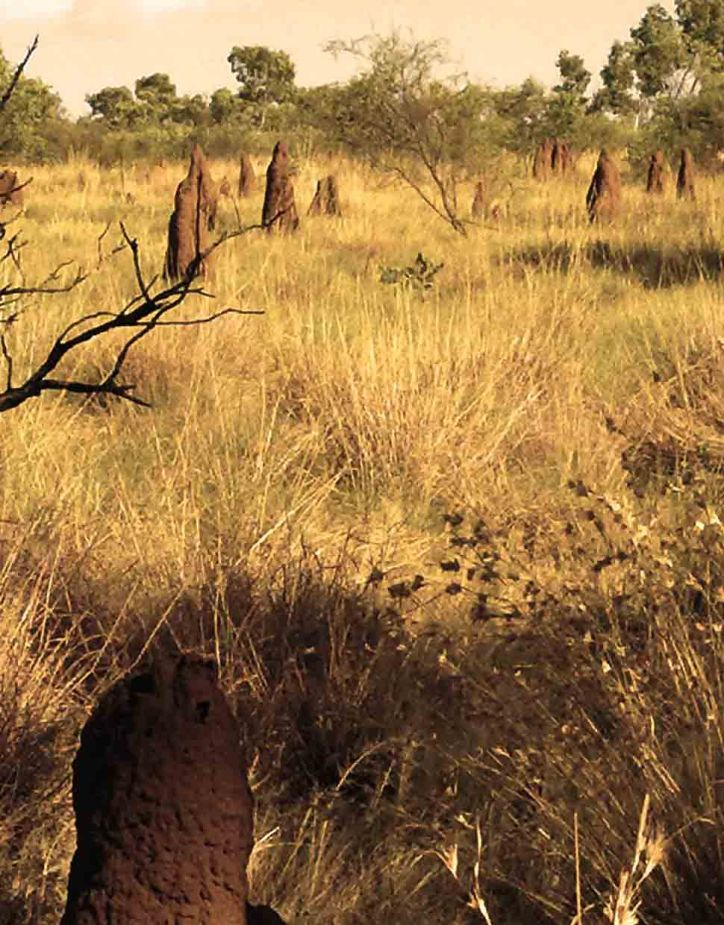 termite-mounds-lineup